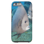 Underwater Life, FISH:  a pair of Gray Angelfish Tough iPhone 6 Case