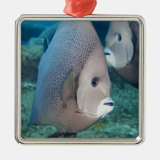 Underwater Life, FISH:  a pair of Gray Angelfish Metal Ornament