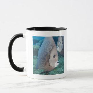Underwater Life, FISH:  a pair of Gray Angelfish Mug