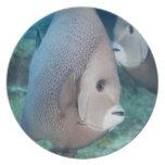Underwater Life, FISH:  a pair of Gray Angelfish Plates