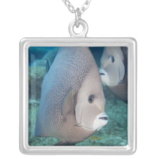 Underwater Life, FISH:  a pair of Gray Angelfish Silver Plated Necklace