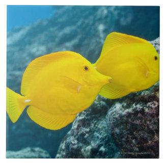 Underwater life; FISH: A Pair of Yellow Tangs Ceramic Tile