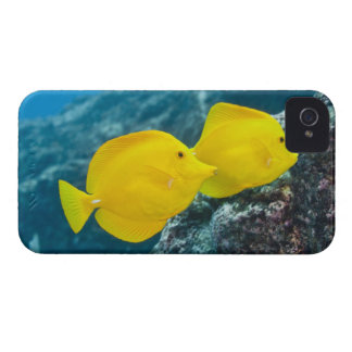 Underwater life; FISH: A Pair of Yellow Tangs iPhone 4 Case