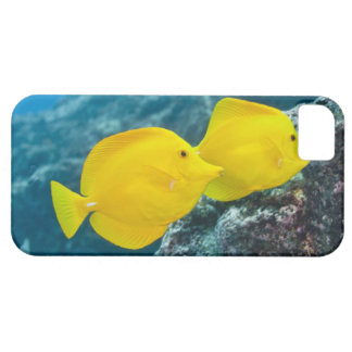 Underwater life; FISH: A Pair of Yellow Tangs iPhone SE/5/5s Case