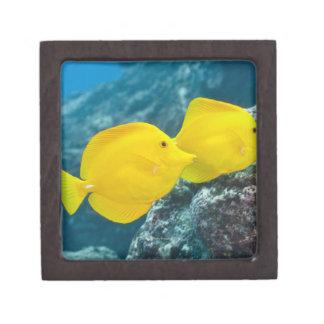 Underwater life; FISH: A Pair of Yellow Tangs Jewelry Box