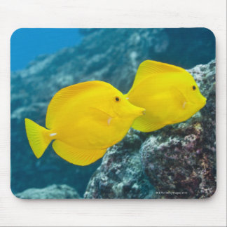 Underwater life; FISH: A Pair of Yellow Tangs Mouse Pad