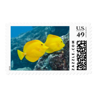 Underwater life; FISH: A Pair of Yellow Tangs Stamp