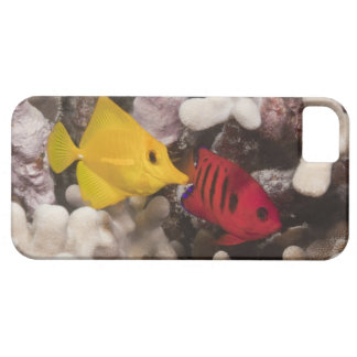 Underwater life; FISH: A Yellow Tang (Zebrasoma iPhone SE/5/5s Case