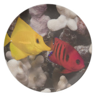 Underwater life; FISH: A Yellow Tang (Zebrasoma Melamine Plate