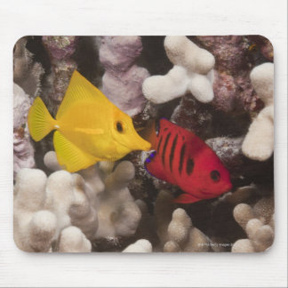 Underwater life; FISH: A Yellow Tang (Zebrasoma Mouse Pad