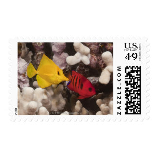 Underwater life; FISH: A Yellow Tang (Zebrasoma Postage Stamp