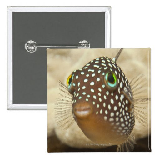Underwater life; FISH:  Close-up portrait of a 2 Inch Square Button