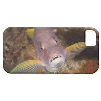 Underwater Life; FISH:  Close up portrait of a iPhone SE/5/5s Case