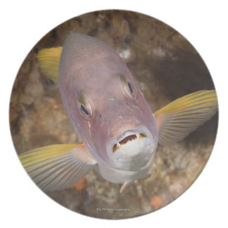 Underwater Life; FISH:  Close up portrait of a Melamine Plate