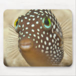 Underwater life; FISH:  Close-up portrait of a Mouse Pad