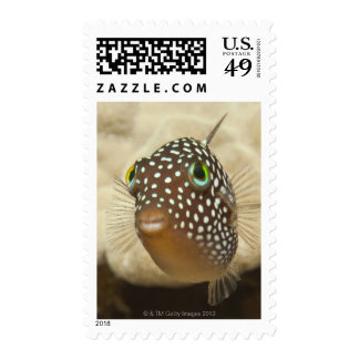 Underwater life; FISH:  Close-up portrait of a Postage