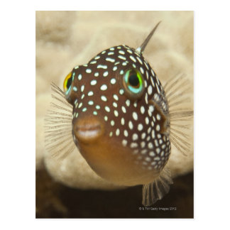 Underwater life; FISH:  Close-up portrait of a Postcard