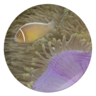 Underwater LIfe; FISH: Clownfish (Pink Plate