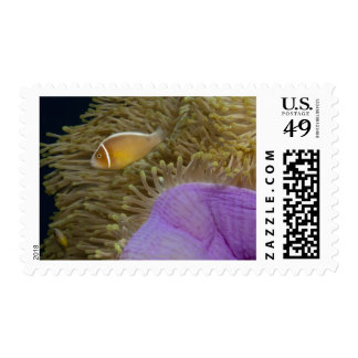 Underwater LIfe; FISH: Clownfish (Pink Postage Stamp