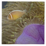 Underwater LIfe; FISH: Clownfish (Pink Large Square Tile