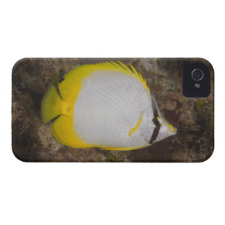 Underwater Life, FISH: Colorful Spotfin iPhone 4 Case