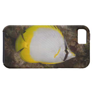 Underwater Life, FISH: Colorful Spotfin iPhone SE/5/5s Case