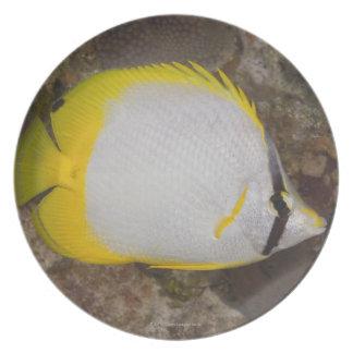 Underwater Life, FISH: Colorful Spotfin Melamine Plate