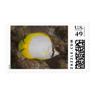Underwater Life, FISH: Colorful Spotfin Postage