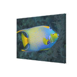 Underwater Life; FISH:  Queen Angelfish Gallery Wrapped Canvas