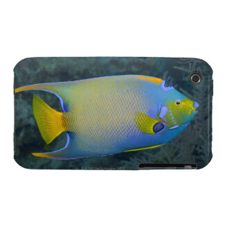 Underwater Life; FISH:  Queen Angelfish Case-Mate iPhone 3 Case