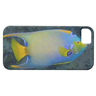 Underwater Life FISH Queen Angelfish iPhone 5 Case