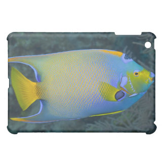 Underwater Life; FISH: Queen Angelfish Cover For The iPad Mini
