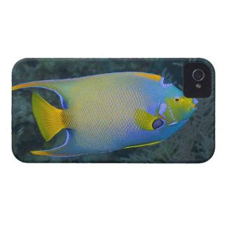 Underwater Life; FISH:  Queen Angelfish iPhone 4 Case