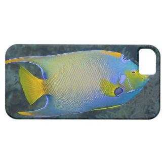 Underwater Life; FISH:  Queen Angelfish iPhone SE/5/5s Case