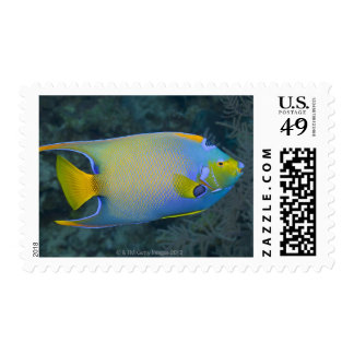 Underwater Life; FISH:  Queen Angelfish Postage