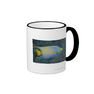 Underwater Life; FISH:  Queen Angelfish Ringer Mug