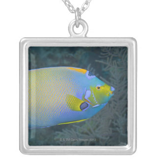 Underwater Life; FISH:  Queen Angelfish Silver Plated Necklace