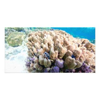 Underwater life photo card