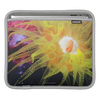 Underwater organism sleeves for iPads