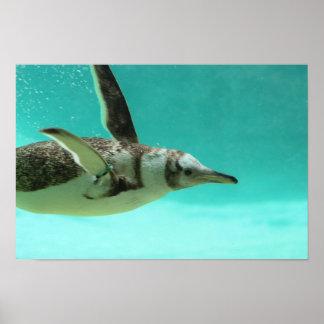 Underwater Penguin Print