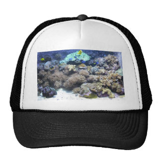 Underwater photography - colorful tropical fish trucker hat
