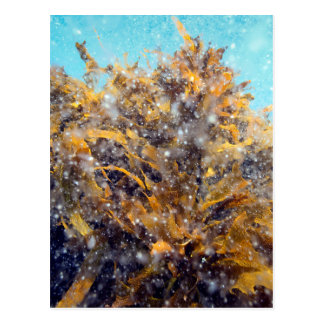 Underwater plankton soup and kelp postcard