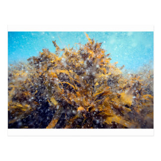 Underwater plankton soup and kelp post card