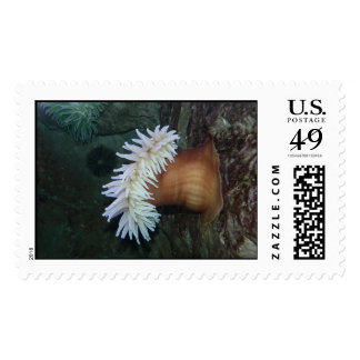 Underwater plant. stamps