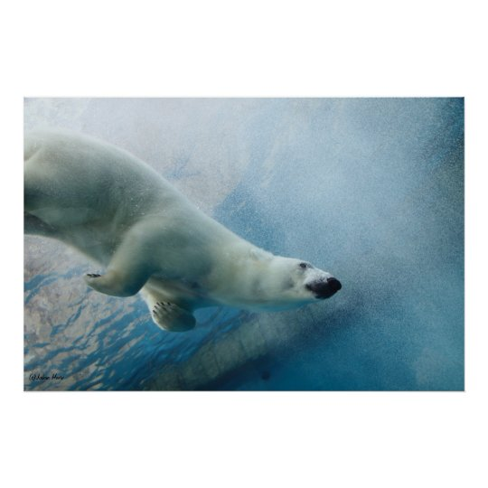 Underwater Polar Bear Poster