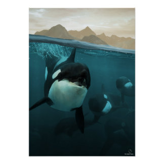 Underwater scene with orca family plaat