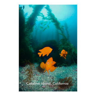 Underwater Scenery Poster