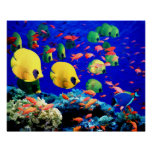 Underwater Sea Coral & Tropical Fish Poster