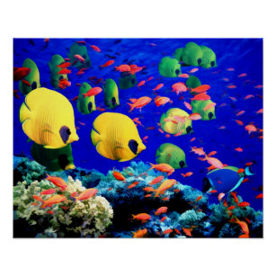 Underwater Sea Coral Tropical Fish Poster