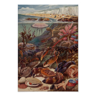 Underwater Sea Crab Lobster Marine Clam Coral Poster